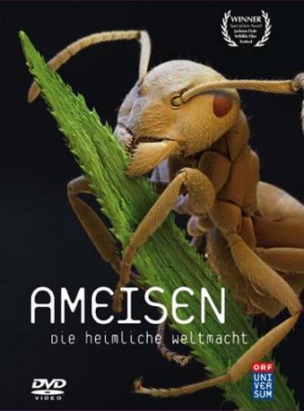Ameisen - Die heimliche Weltmacht (2005)